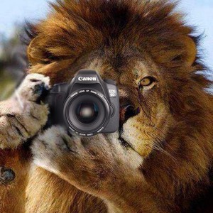 Lion with 6D
